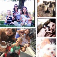 Andreia's dog day care
