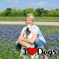 Kristinia's dog day care