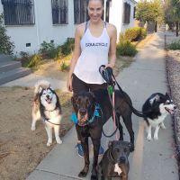 Breeda's dog day care