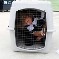 Luke's dog day care