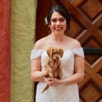 Glenda's dog day care