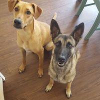 Margareth Emilia & Mauricio's dog day care