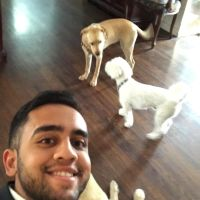 Ankit's dog boarding