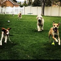 Amber's dog day care