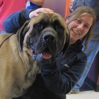 Karlie's dog day care