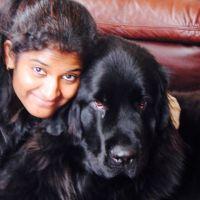Nirmala's dog day care