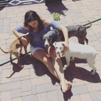 pet sitter Brittany