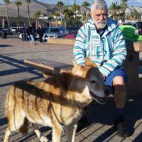 dog walker Bob