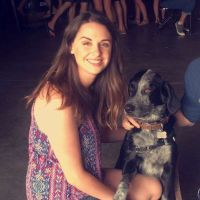 Sydney's dog boarding