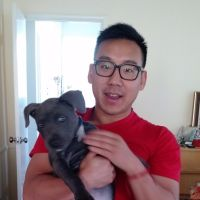 Vish's dog day care