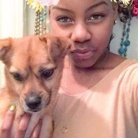 Demi's dog day care