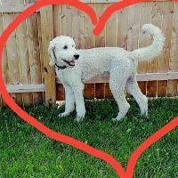 dog walker Bobbie