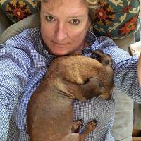 Inez's dog day care
