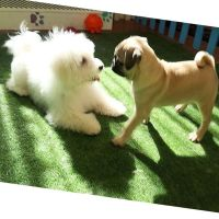 Jadesola's dog day care