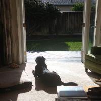 Becky's dog boarding