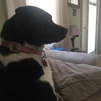 dog walker Maury