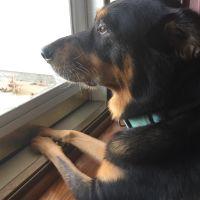 Giselle's dog boarding