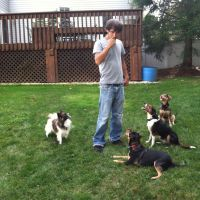 Kyle's dog day care