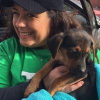 Teresa's dog day care