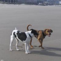 Shadie's dog day care
