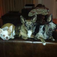 pet sitter Meagan