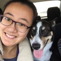 dog walker Yi