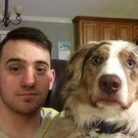 Noah's dog day care