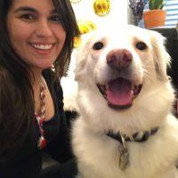 Carolina's dog boarding