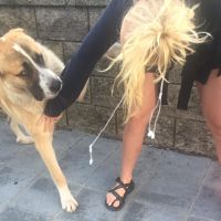 pet sitter Myca