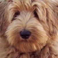 Mackenzy's dog day care