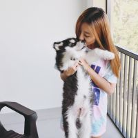 Marsha's dog day care