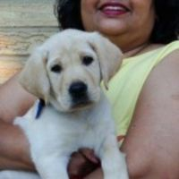 dog walker Jaya