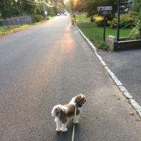 dog walker Louise