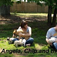 Angela's dog day care