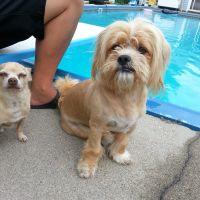 William's dog day care