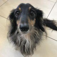 dog walker Sheryl