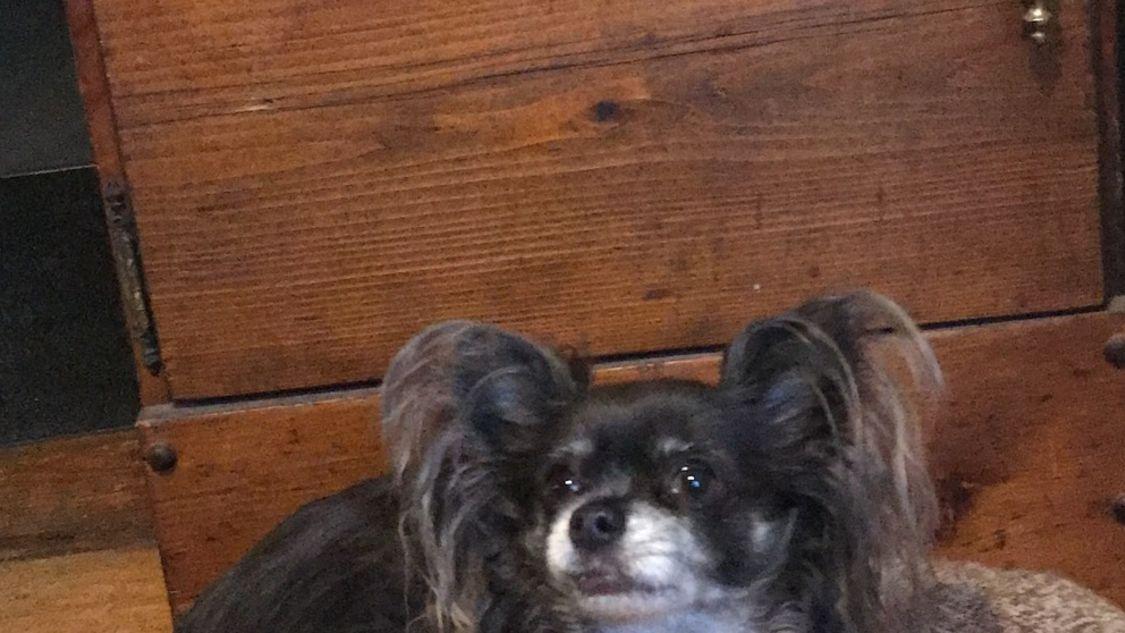 Waynesboro Dog Boarding