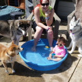 Sam's Stay-n-Play dog boarding & pet sitting