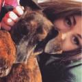 Canine companion dog care dog boarding & pet sitting