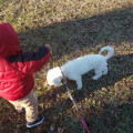 Fur baby Dog care dog boarding & pet sitting