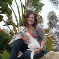 Bozley's Castle & Petitude Coach dog boarding & pet sitting