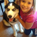 Kristy's Kritter Kare dog boarding & pet sitting