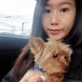 Sunshine dog boarding dog boarding & pet sitting