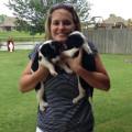 HandyAndi's Pet Care dog boarding & pet sitting