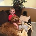 La Vida Doggie! dog boarding & pet sitting