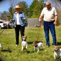Camp Shiloh Dog Retreat dog boarding & pet sitting