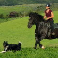 A Mountain Vacation For Your Pets! dog boarding & pet sitting
