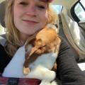 Lauren's Capisic Dog Retreat dog boarding & pet sitting