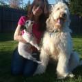 ''The Scruffy Puppy''  Hazlet NJ dog boarding & pet sitting