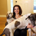 Bones & Belly Rubs dog boarding & pet sitting